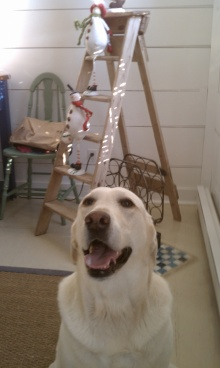 Dog with Christmas decorations on ladder