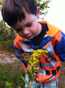 Orange and yellow together! Goldenrods are a great nectar source for feeding monarchs.