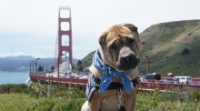 Dog travel--in front of bridge