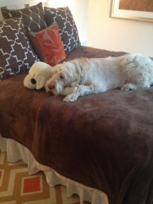 Floyd curled up with Lamb Chop