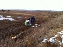 doing a transect at Folgers salt marsh
