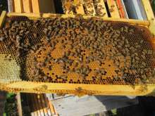 Brood, honey and lots of bees!