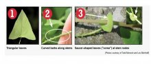 Check to see if any plants have these characteristics.