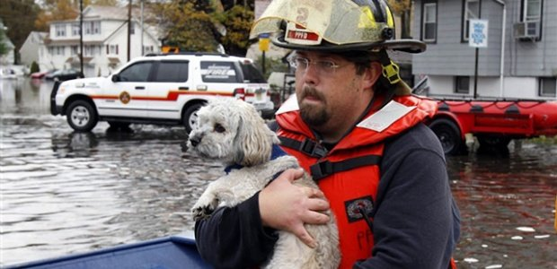 Helping Animals Affected by Hurricane Sandy