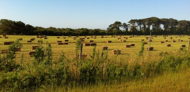 Bartlett's Farm hay field on Nantucket