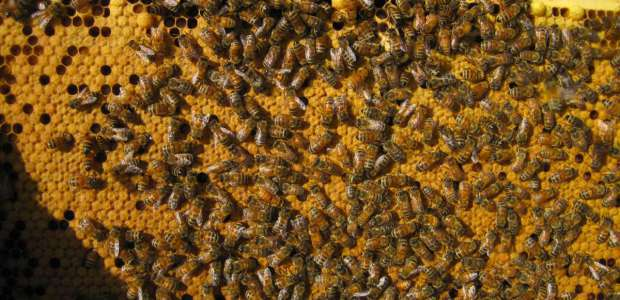 A nice dense brood pattern is what we need to see this time of year!