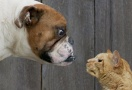 http://www.petside.com/article/cats-vs-dogs-how-pet-preference-plays-personality