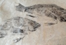Fish Print at 1800 House Nantucket