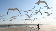 Flock of Seagulls with child on the beach