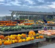 Pumpkin picking at Bartlett's Farm, photo by Christy Bassett Baker