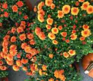 Pumpkins and Fall Flowers herald the arrival of October