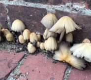 Mushrooms at MBC.  Photograph courtesy of the author.