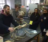 Andrew McKenna-Foster showing UMass Boston students how a mute swan skeleton fits together.