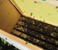 Adding the second brood box to my east hive.