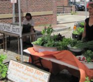Get your island grown produce on East Chestnut Street this Saturday only.