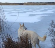 On frozen pond.