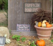 Pumpkin Pond Farm