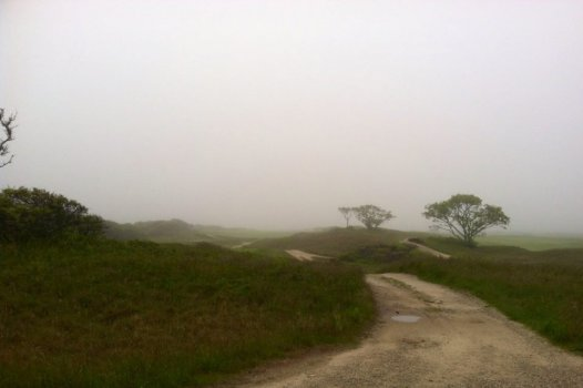 Road into the moors on a misty day on Nantucket